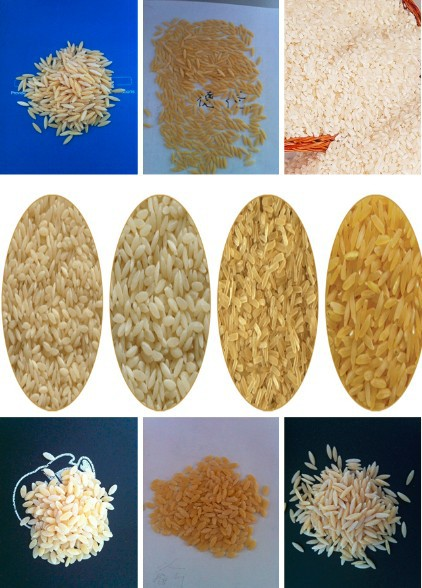 黄金大米生产线